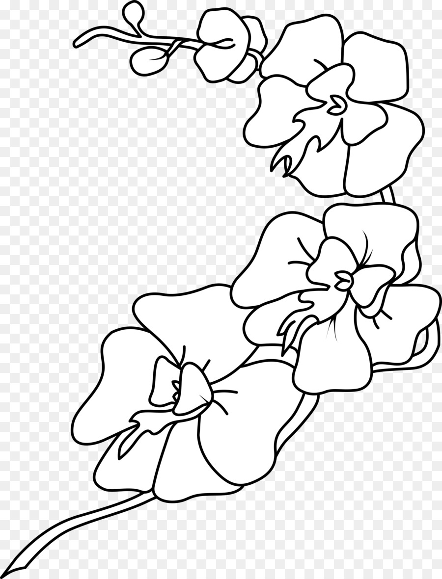 Orchid clipart drawing.