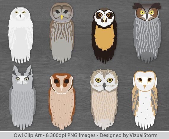 clipart owl realistic