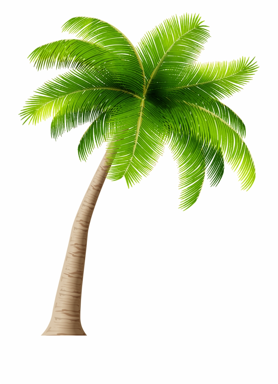 palm trees clipart transparent background