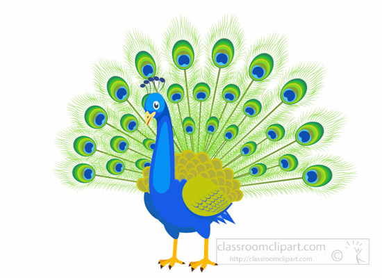 Peacock clipart green.