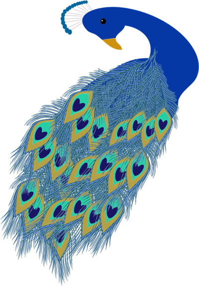 Peacock clipart teal.