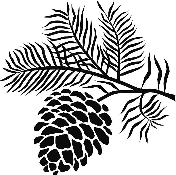 pinecone clipart outline