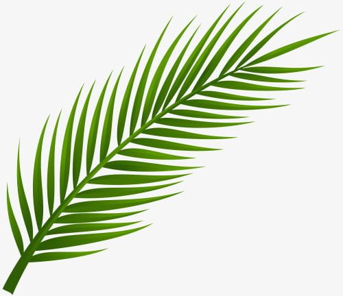 Plant clipart exotic green.