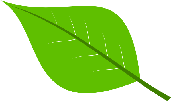 leaf clipart vector