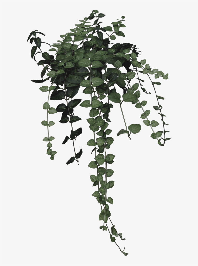 Plant clipart aesthetic.