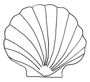 Shell clipart template.