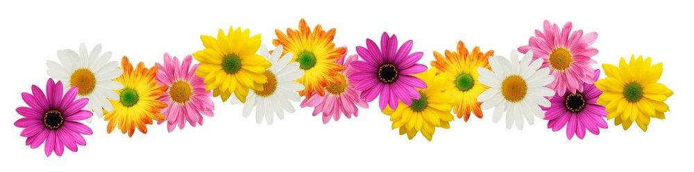 spring flower clipart wallpaper