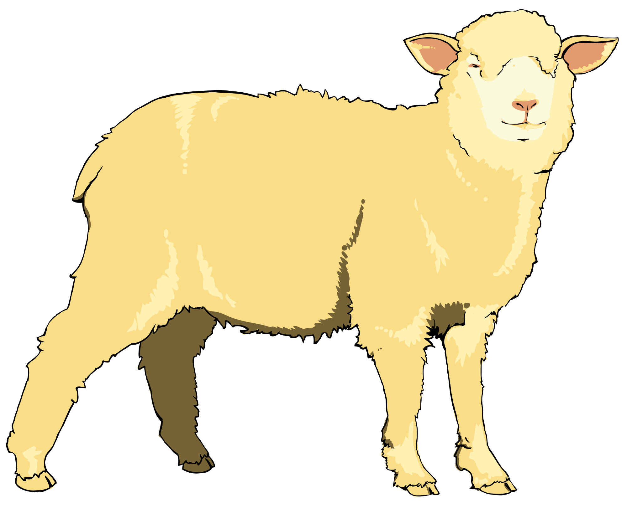 sheep clipart realistic
