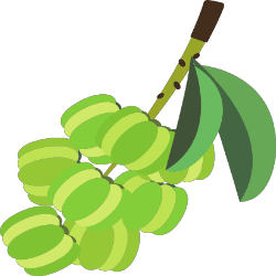 greengage clipart gooseberry