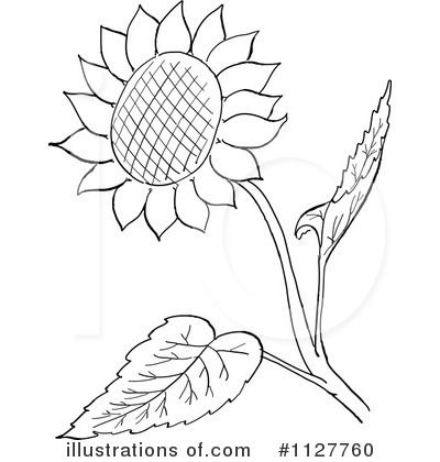 flower black and white clipart sunflower