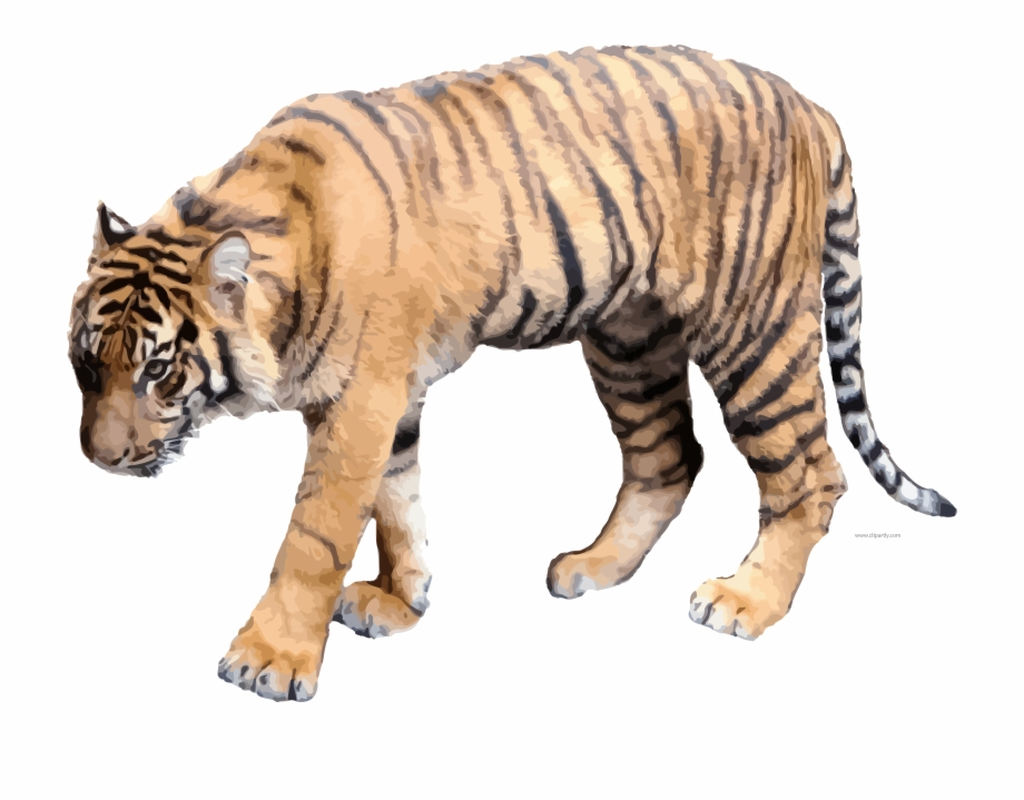 tiger clipart real