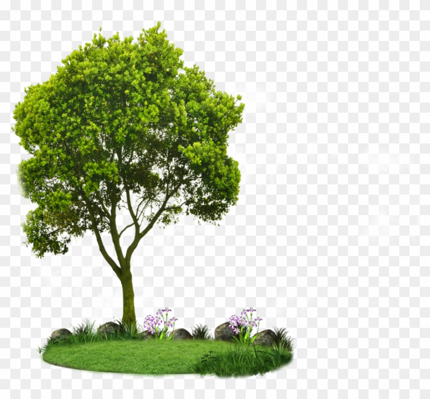 tree plan clipart png hd