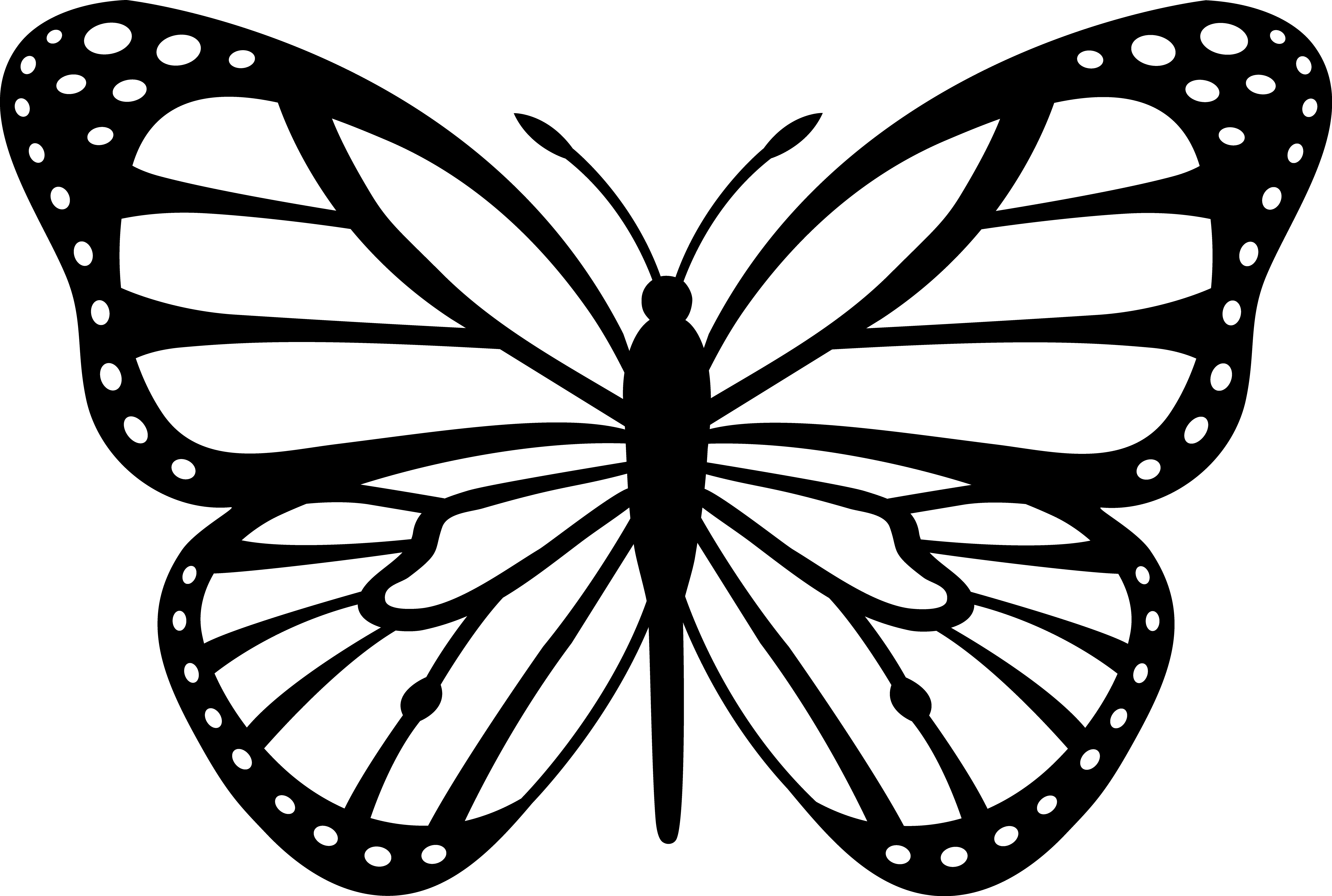 butterfly black and white clipart vector