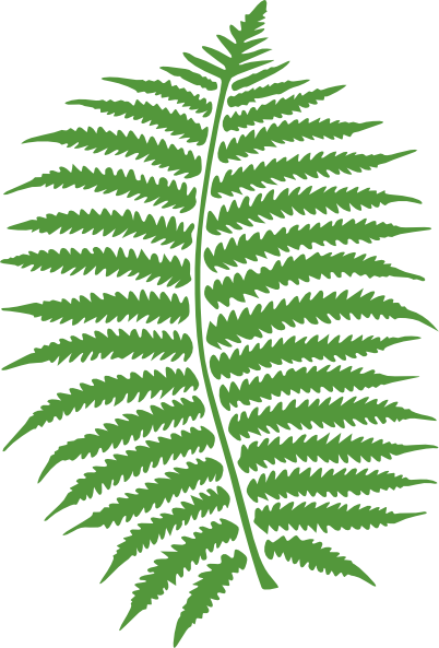 woodland clipart green fern