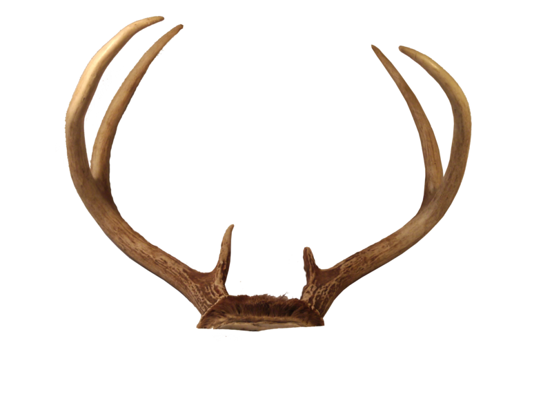 reindeer antlers clipart clear background
