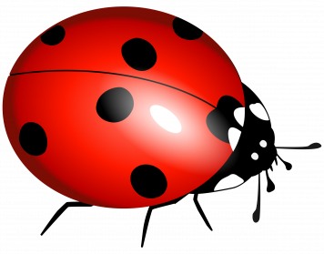 bug clip art clear background