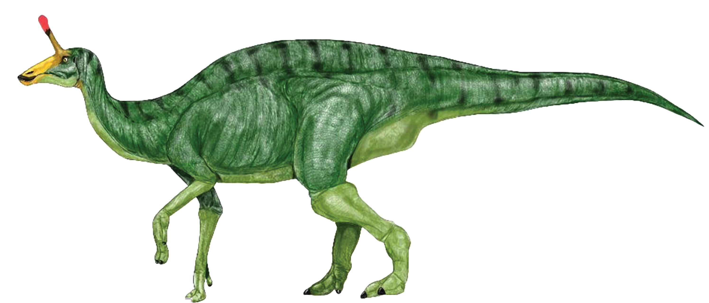dinosaurs clipart realistic