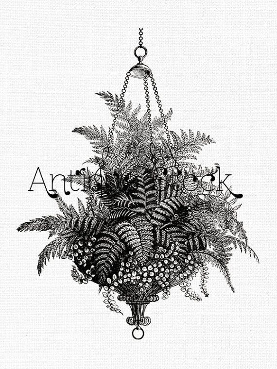 fern clipart hanging